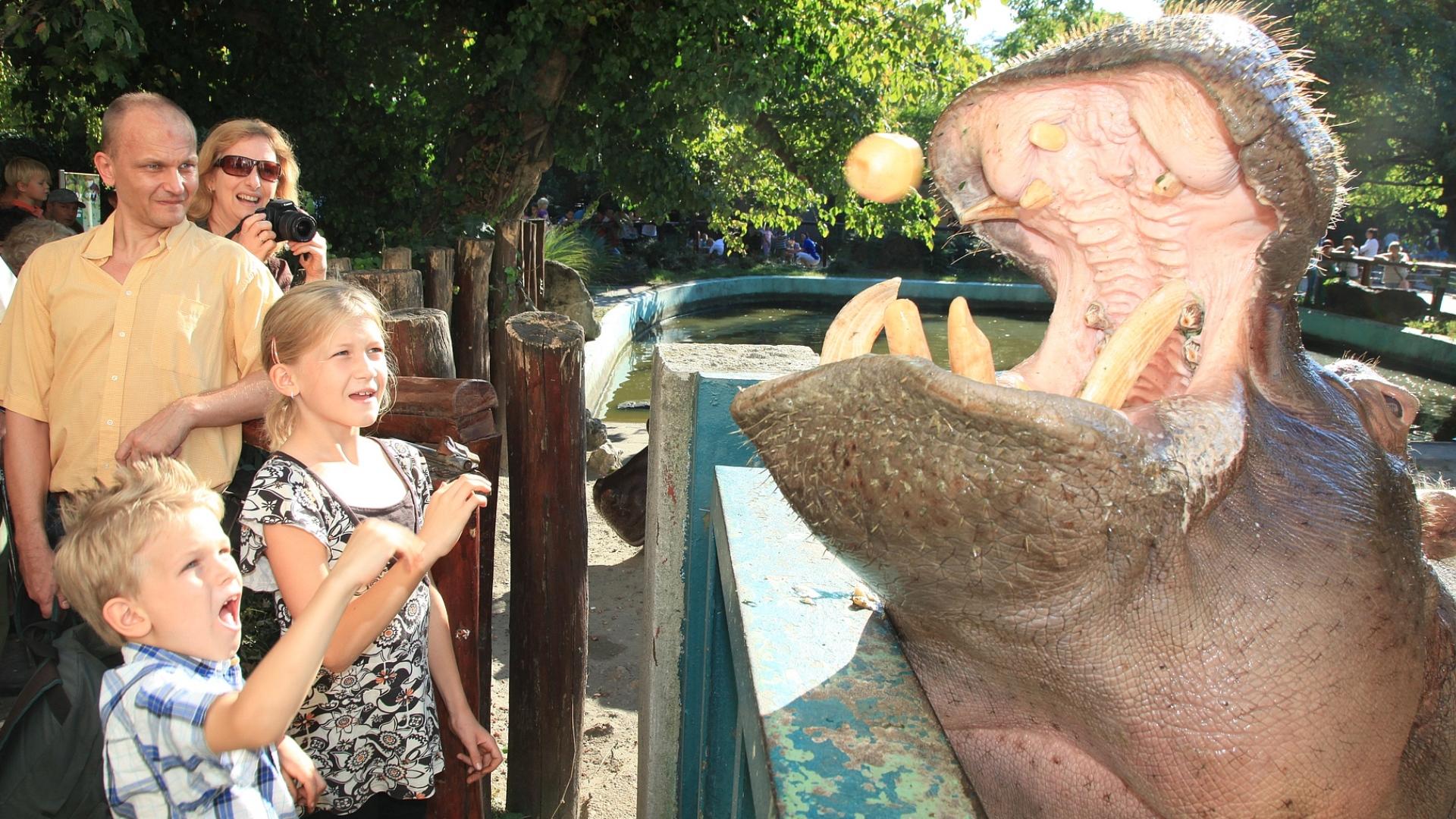 حديقة حيوان بودابست والحديقة النباتية